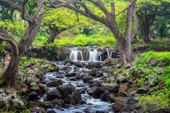 Ruhiger Wasserfall Stockbilder