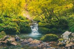 Ruhiger Wasserfall im Dschungel Stockbild