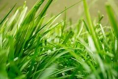 Ruhiges frisches Gras unter einem warmen Morgensonnenlicht, uns erinnernd, Mutter Natur zu konservieren und zu schützen, treffen  Lizenzfreie Stockbilder