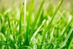 Ruhiges frisches Gras unter Strahlen der Abendsonne Dieses Gras stellt der Geistigkeit, warmen, sauberen und reinen Licht des Zen Stockfoto