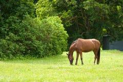 Ruhiges Pferd, landwirtschaftliche Szene Stockfotos