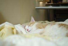 Ruhiges Schlafengesicht Stockbild