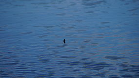 Ruhiges Seewasser stockbilder