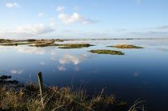 Ruhiges Sumpfgebiet stockfoto