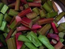 Ruibarbo orgânico Imagens de Stock