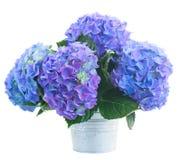 Ruikertje   van blauwe hortensiabloemen royalty-vrije stock afbeelding