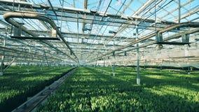 Ruime serre met groene zaailingen in zonlicht stock footage