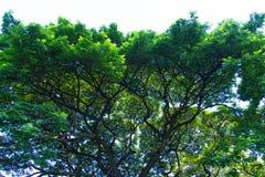 Ruimte groen voor stedelijk royalty-vrije stock foto's