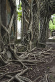 Ruin of abandoned building covered with roots on Ross Island. An Royalty Free Stock Photo