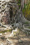 Ruin of abandoned building covered with roots on Ross Island. An Stock Photography