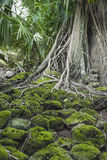 Ruin of abandoned building covered with roots on Ross Island. An Stock Photo