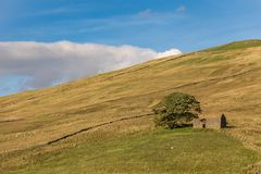 The ruin of a barn next to a tree. Seen in the Yorkshire Dales near Gearstones, North Yorkshire, UK Royalty Free Stock Photo