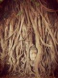 Ruin of buddha head statue in Ayudhaya Historical park Stock Photography