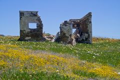Ruin in field with flowers Royalty Free Stock Image