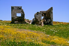 Ruin in meadow Royalty Free Stock Photo