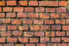 Ruin red bricks. Texture red brick with green plant Stock Images