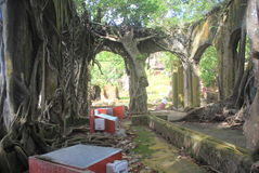 Ruin and the Roots In Andaman. Royalty Free Stock Photo