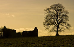 The ruin and the tree Royalty Free Stock Image