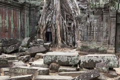 Ruin and wall pieces in Ta Prohm Stock Photos