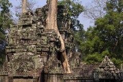 Ruina antigua del templo de TA Prohm, complejo de Angkor Wat, Siem Reap, Camboya El árbol crece de ruina del templo Fotos de archivo libres de regalías