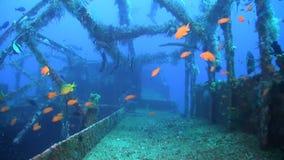 Ruina con los pescados de la abundancia almacen de metraje de vídeo