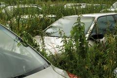 Ruina de coches viejos Imagenes de archivo