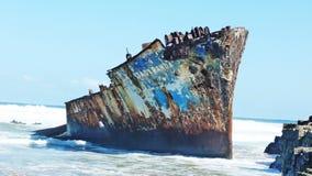 Ruina de la nave del Jacaranda foto de archivo