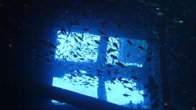 Ruina de la nave en el fondo del mar almacen de metraje de vídeo