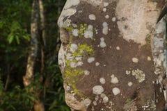 Ruina de piedra antigua en el templo de Angkor Wat Cara de piedra resistida y cubierta de musgo Ruina del templo de la herencia d fotografía de archivo