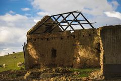 Ruina rolny dom na zielonym polu z baranim pasaniem obraz stock
