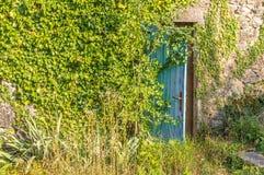 Ruina vieja con la puerta y la hiedra de madera Fotografía de archivo libre de regalías