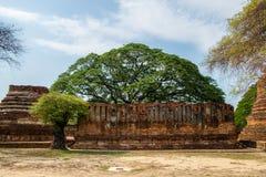 Ruinas antiguas del templo con el árbol en lugar de la adoración famosa Fotografía de archivo