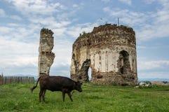 Ruinas de Bociulest fotografía de archivo