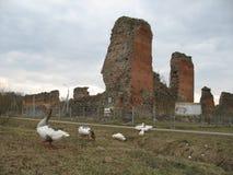 Ruinas de la cerradura de Golshansky belarus foto de archivo libre de regalías