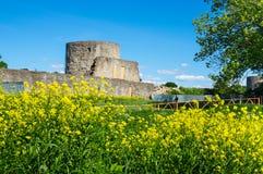 Ruinas de la fortaleza de Koporye Fotografía de archivo