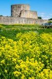 Ruinas de la fortaleza de Koporye Imagenes de archivo