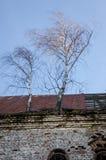 Ruinas de la iglesia de piedra vieja de las paredes arruinadas cuyo son los árboles Foto de archivo libre de regalías