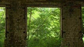 Ruinas de una casa abandonada y de los árboles del ladrillo que crecen al aire libre metrajes