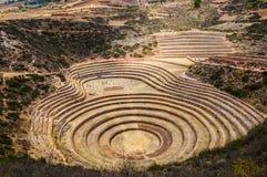 Ruinas del inca del Moray Las terrazas agrícolas Incan en el Moray foto de archivo