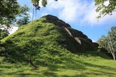 Ruinas del templo en el parque nacional de Tikal, Guatemala Foto de archivo libre de regalías