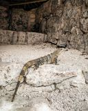 Ruinas mayas de Iguanna Foto de archivo