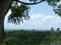Ruinas mayas de Tikal Fotografía de archivo libre de regalías