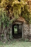 Ruinas que construyen con los árboles Fotos de archivo libres de regalías