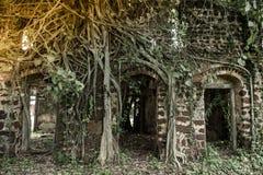 Ruinas que construyen con los árboles Fotografía de archivo