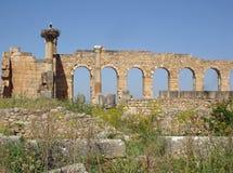 Ruinas romanas en los voloubilis foto de archivo libre de regalías