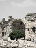 Ruinas y árbol imágenes de archivo libres de regalías