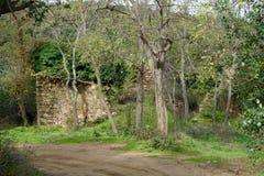 Ruine im Holz Stockfoto
