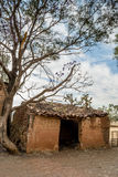 Ruined adobe house and tree Royalty Free Stock Photography