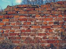 Ruined brick wall Stock Images