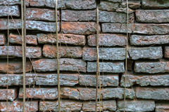 Ruined Brick Wall covered by tree root Royalty Free Stock Image